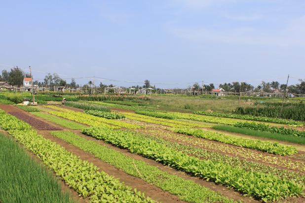 Village de Tra Que